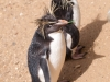 Whipsnade-Zoo-15