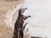 Whipsnade-Zoo-18