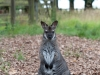 Whipsnade-Zoo-21