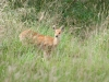Whipsnade-Zoo-23