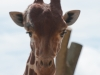 Whipsnade-Zoo-25