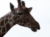 Whipsnade-Zoo-26
