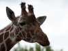 Whipsnade-Zoo-27